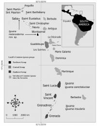 Geographical Distribution of the Three Iguana Groups