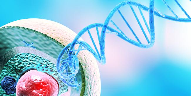 Hard-working enzyme keeps immune cells in line