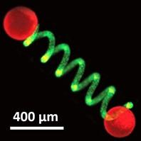 Protocell-Based Micro-Actuator