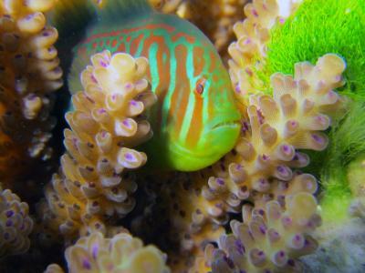 Mutualistic Fish (3 of 3)