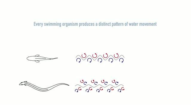 Can We Imitate Organisms' Abilities to Decode Water Patterns for New Technologies?