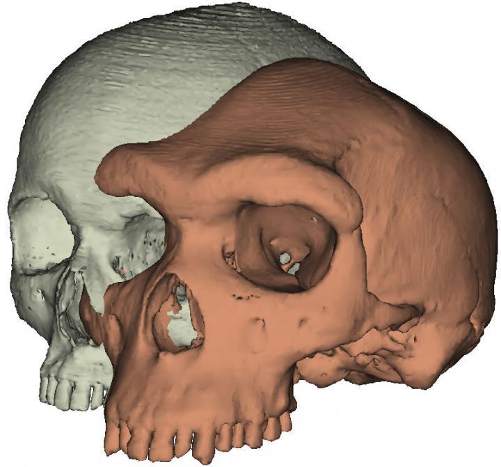 Modern Human Skull Alongside Kabwe1