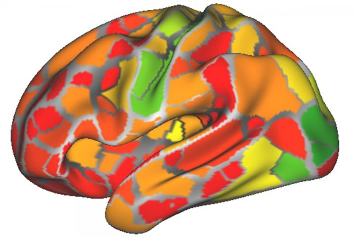 fcMRI Individual Brain Contribution