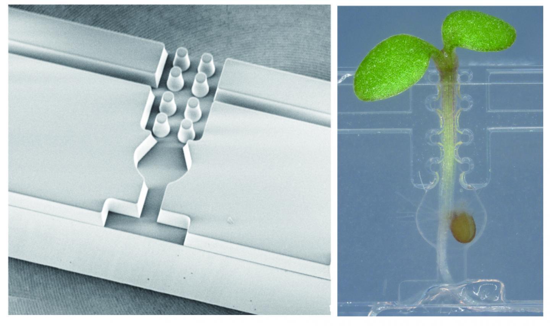 Micrografting Chip