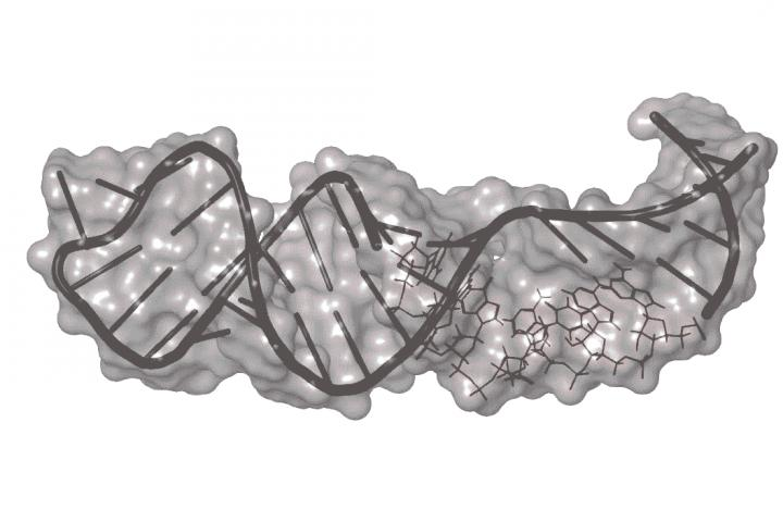 The Hargrove Lab Is Targeting RNA with Drug-Like Small Molecules
