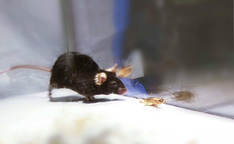 Instinctual Predatory Behavior (1 of 2)