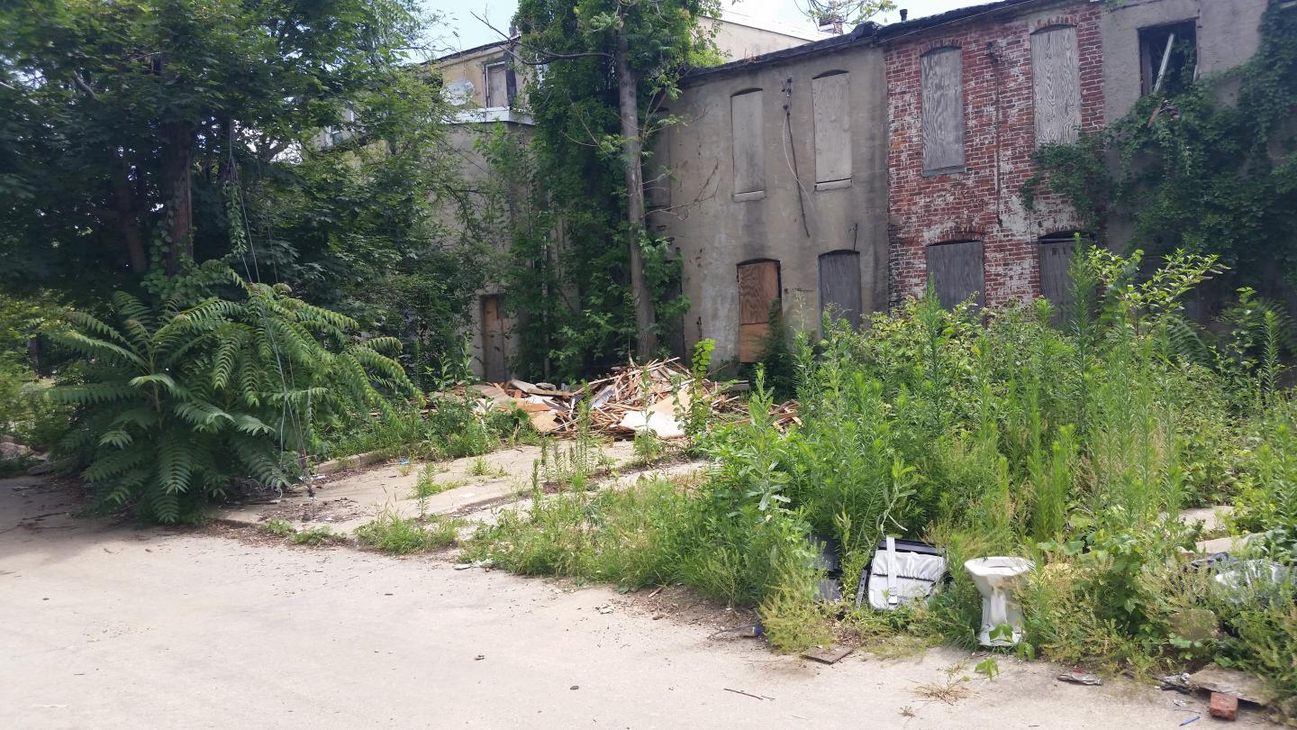 Abandoned Properties are Susceptible to Unintentional Rewilding