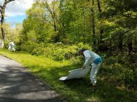 Tick Surveillance: Cloth Drag in Edge Habitat