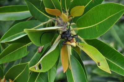 Species Extinction Rates Questioned