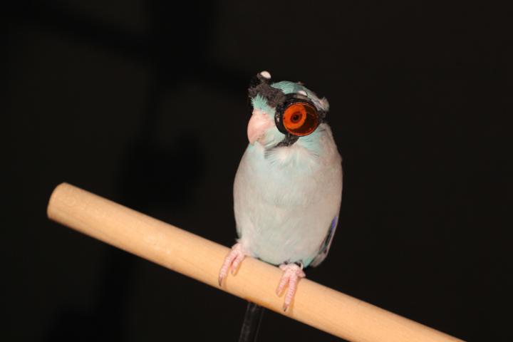 Bird Goggles
