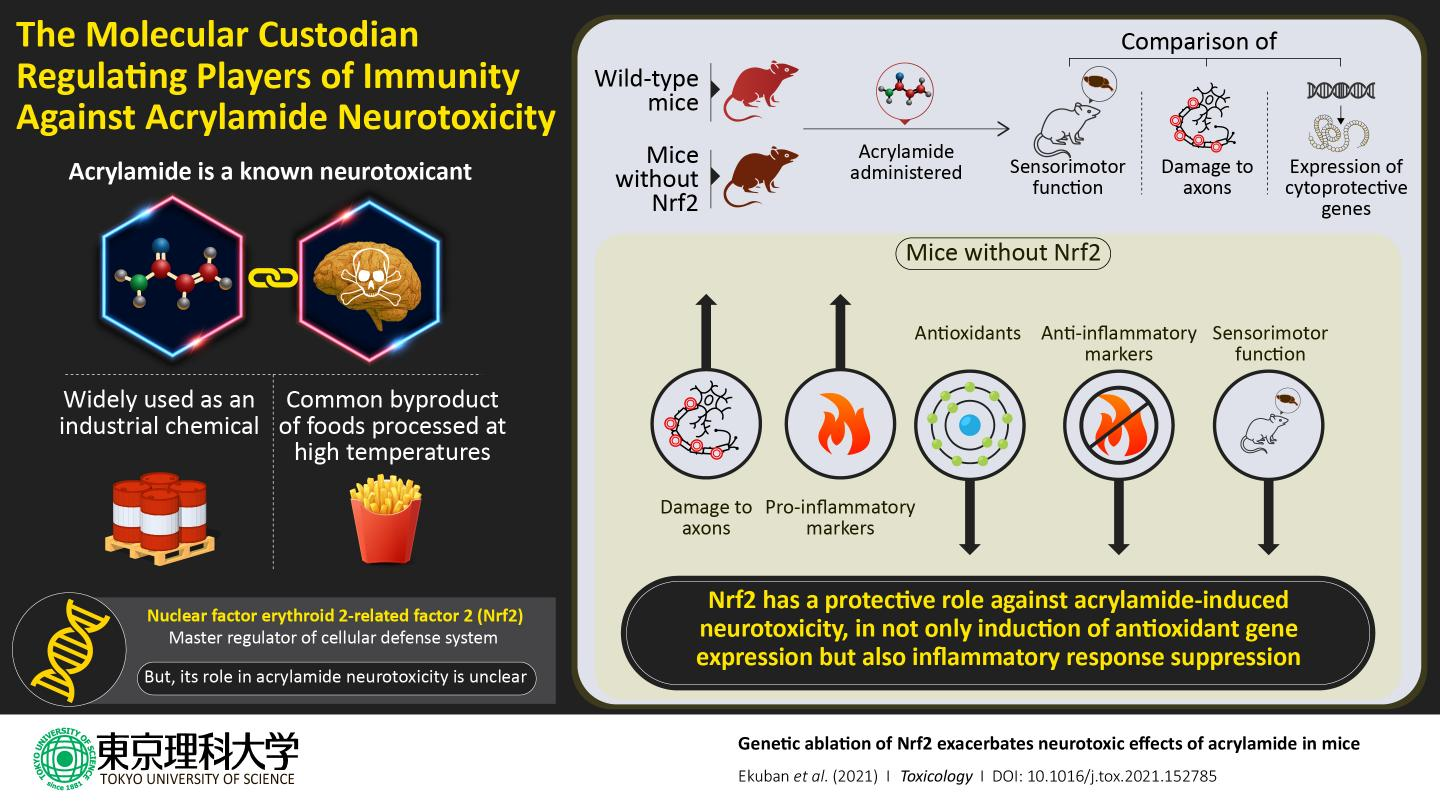 Protein, Nrf2, Increases the Expression of Protective Genes as Part of Toxic Response