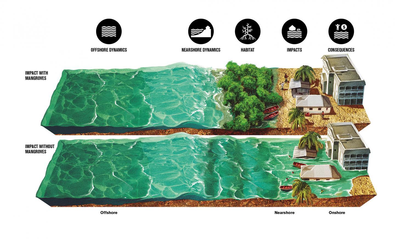 Mangrove Illustration