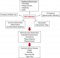 Clinical and Immunologic Factors Implicated in HIV-Associated CAD