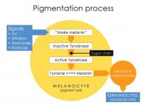 Pigmentation Process