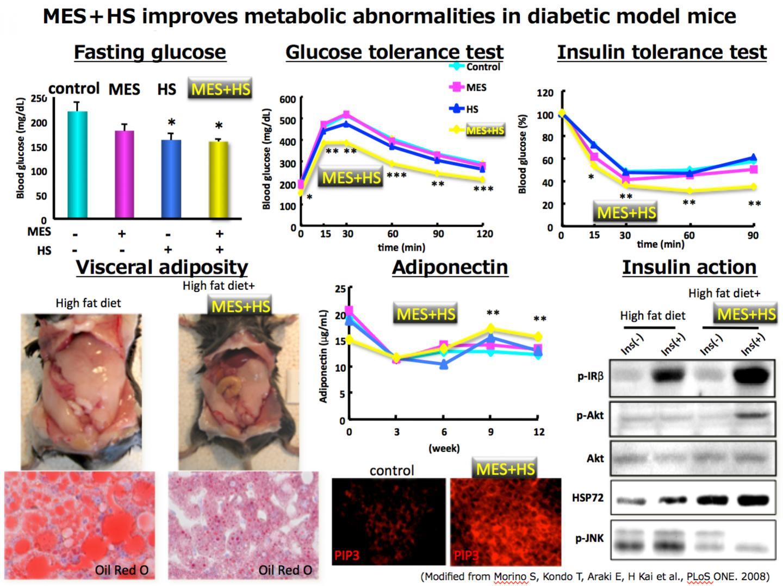 MES+HS in the Diabetic Model Mice