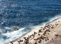 Seals Fleeing