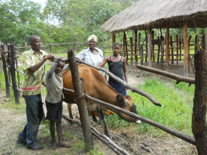 Zambian Family with Gift Cow