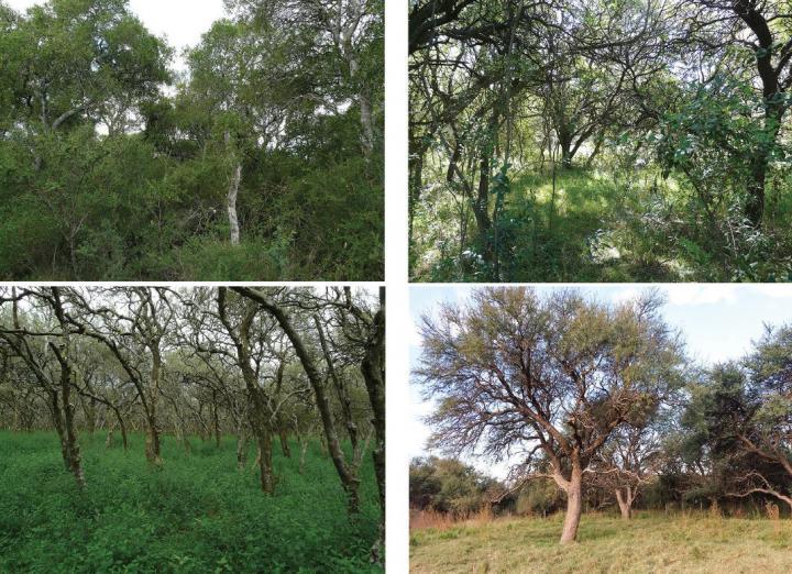 Native vegetation in Espinal province, Argentina
