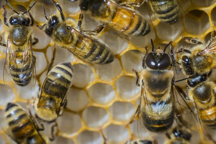 Bees at Roberson Farm