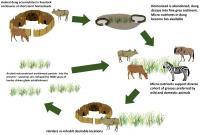 Serengeti Dung Wildlife Graphic