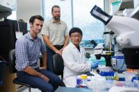 Nematode Study Reveals Opioid Regulator
