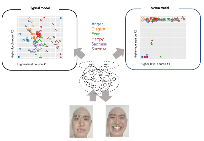 Neural Network Model Shows Why People with Autism Read Facial Expressions Differently