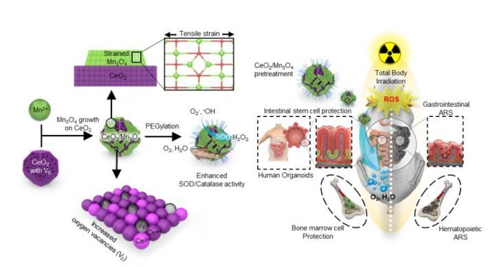 CeO2/Mn3O4 Nanocrystals