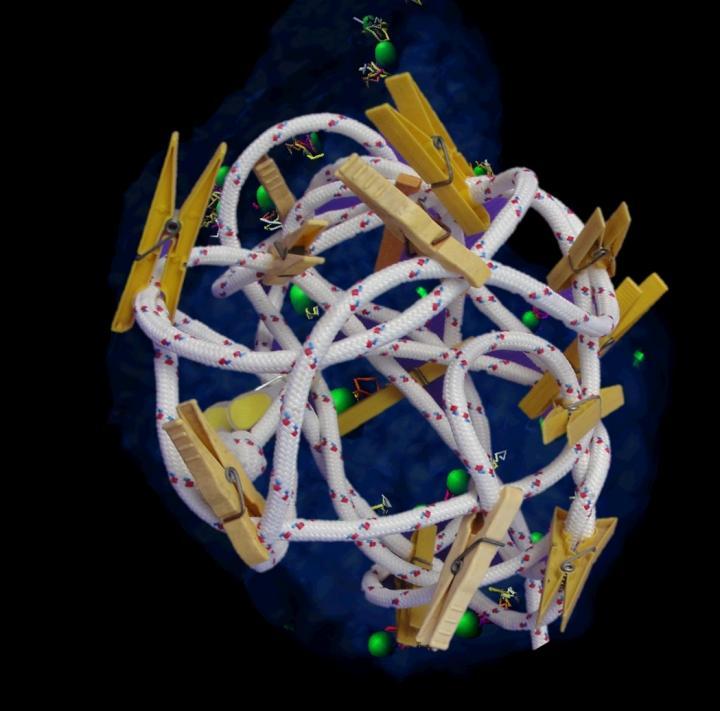 Model Genome in Nucleus