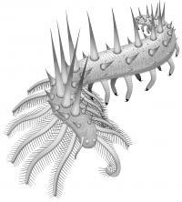 Collinsium ciliosum Reconstruction