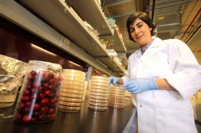 Cranberry Research