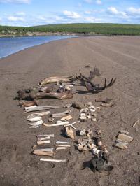 Bones on Riverbar
