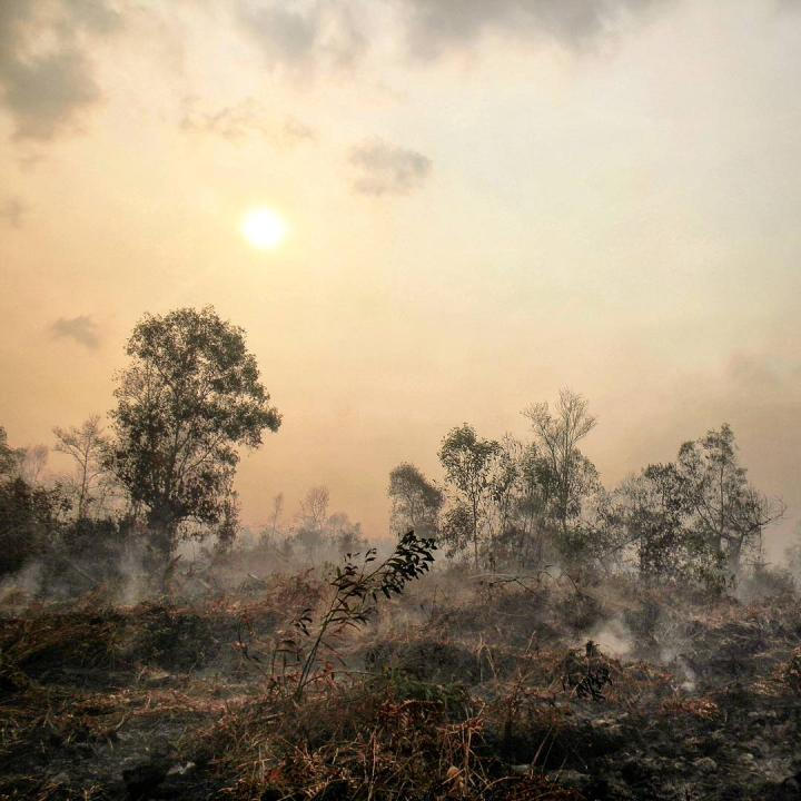 Peatland smouldering following fire in a disturbed forest in southeast Asia