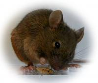 Instinctual Predatory Behavior (2 of 2)