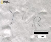 Microplastic fibers