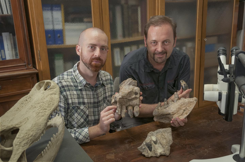 Skull Bones of <i>Razanandrongobe sakalavae</i>