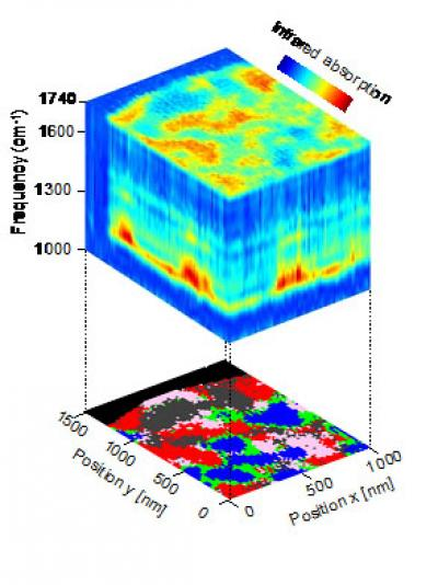 Nanoscale-Resolved Hyperspectral Infrared Data Cube of a Polymer Blend