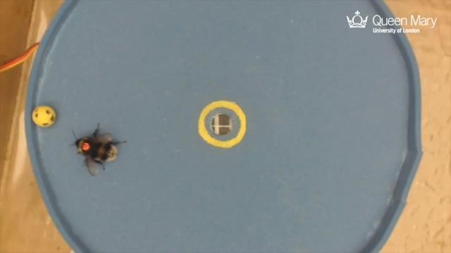 Bee Scores a Goal