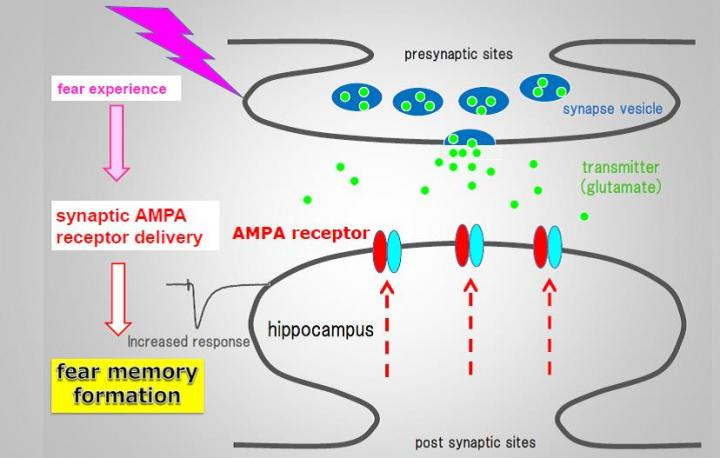 Figure 1: Fear Memory