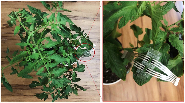 Patch monitors crop plants for stress, disease
