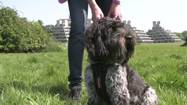 Professor Andy Jones, UEA, on Study into Benefits of Dog Ownership on Physical Activity