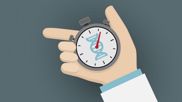 DNA Clock
