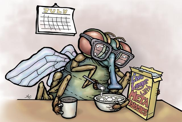 Fruit Fly Calorie-Restricted Diet