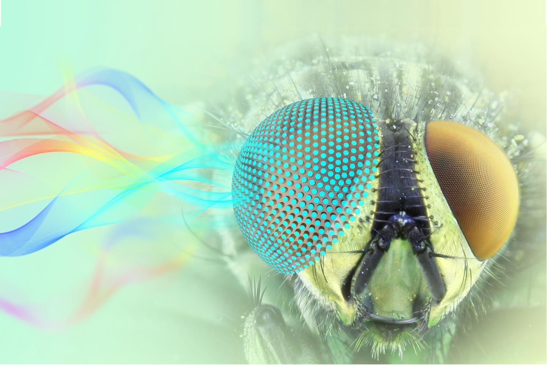 Moth Eye-Inspired Omnidirectional Microwave Antenna