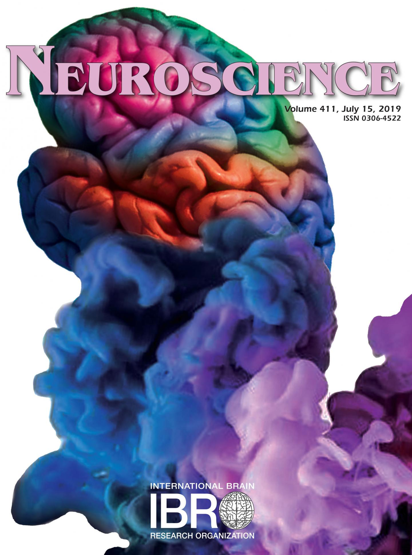 Conscious Activity in the Brain