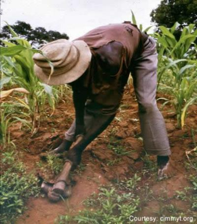 Hoeing African Crops