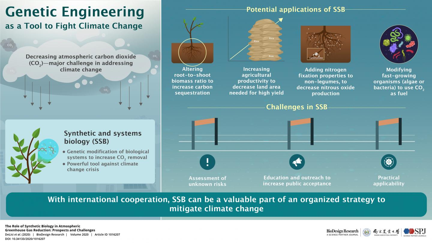 Genetic Engineering as a Tool to Fight Climate Change
