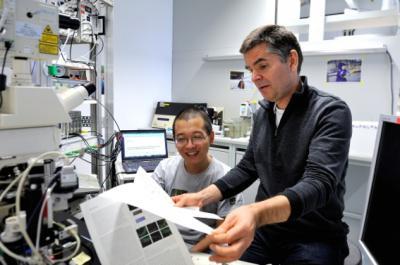 Neuroscience at IST Austria