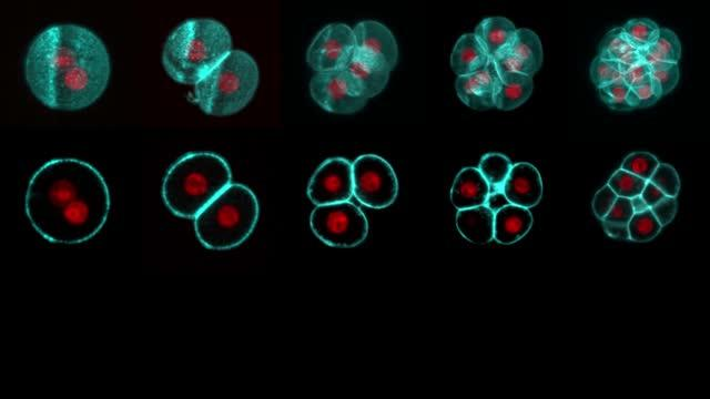New Functionalities for Cells