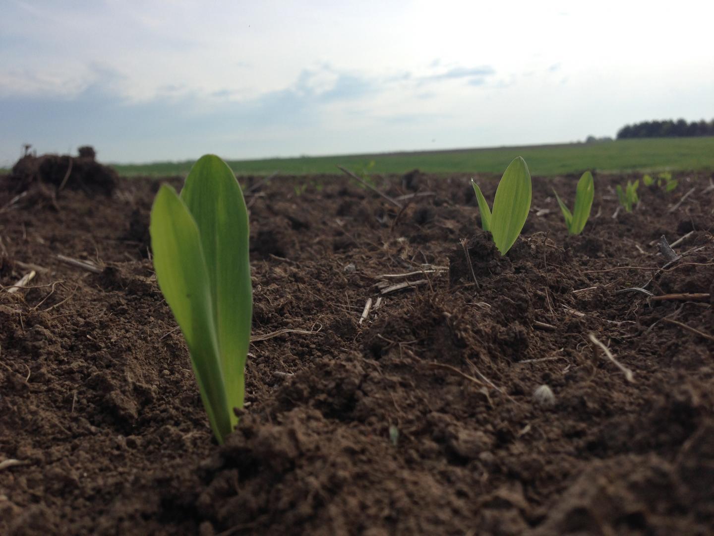 Emerging Crops