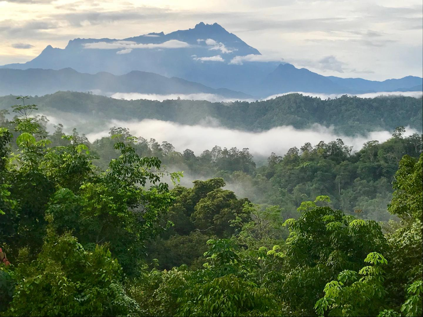 Intact Forest in Borneo